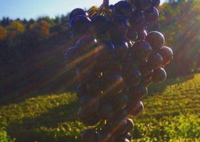 Gönc Winery